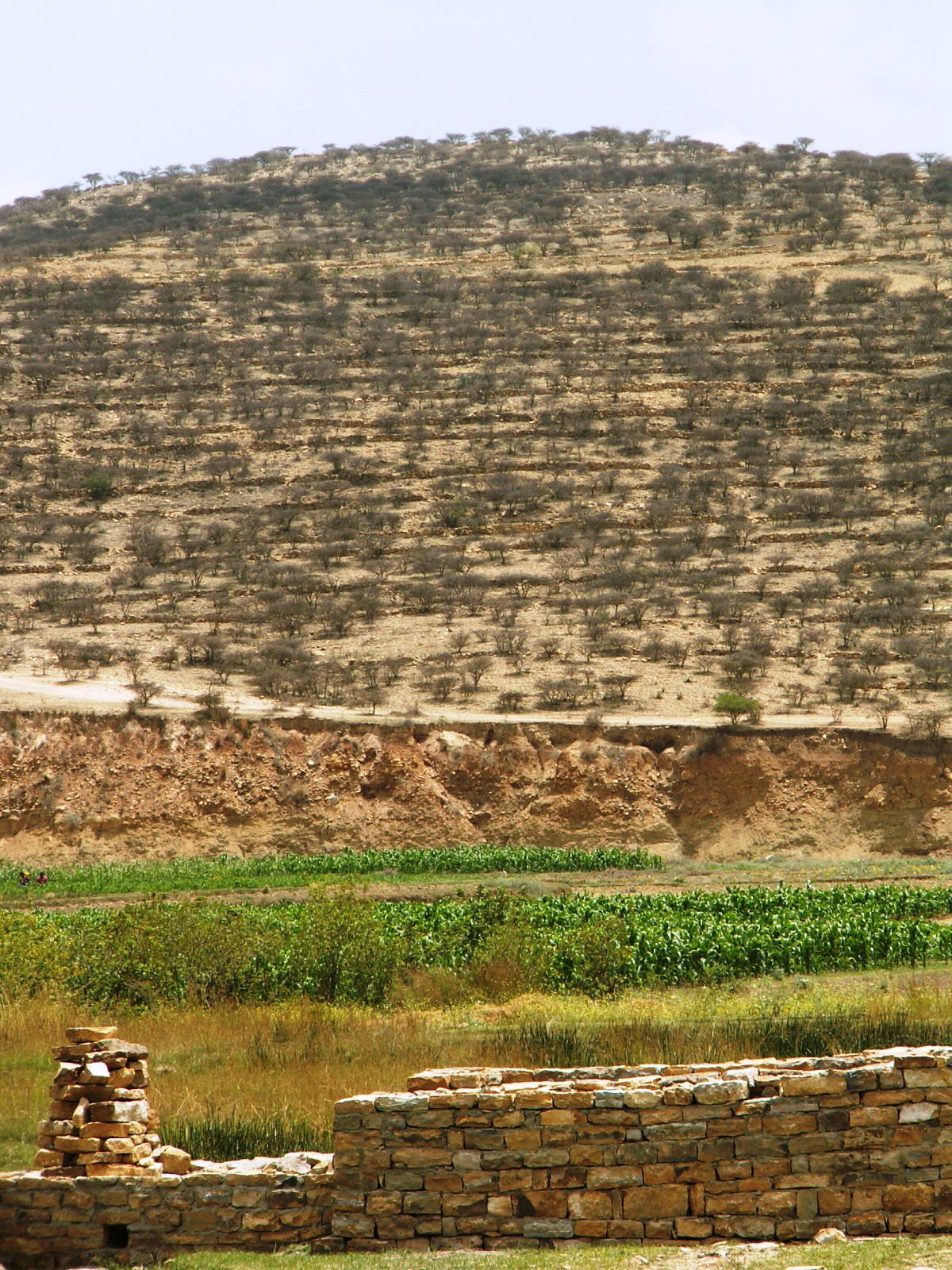 <p>Stone bunds and terracing allow rainwater to infiltrate slops and support irrigation in the valleys. Photo by Chris Reij/WRI</p>