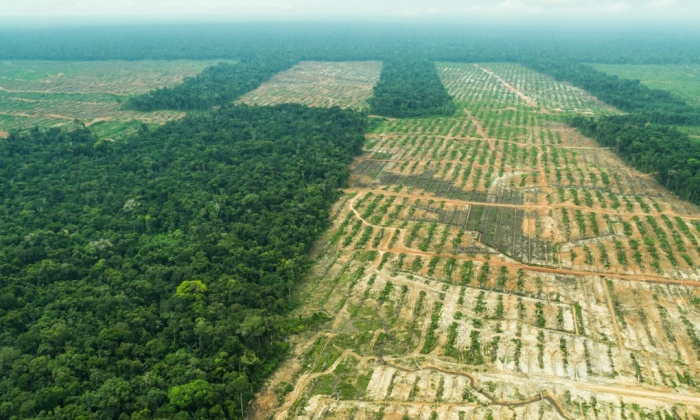 <p>Clear-cut trees strewn across land slated for United Cacao plantation. Photo by EIA.</p>